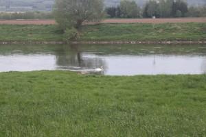 Weser (5)